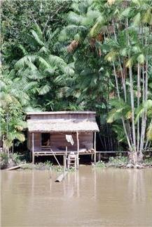 hut in the jungle along a river